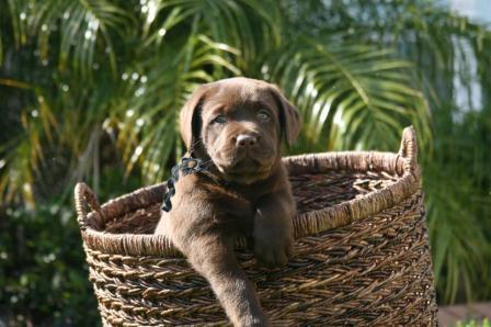 Black Male Basket